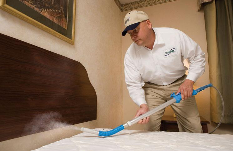 What To Trust To Kill Bed Bugs Indoor And Outdoor