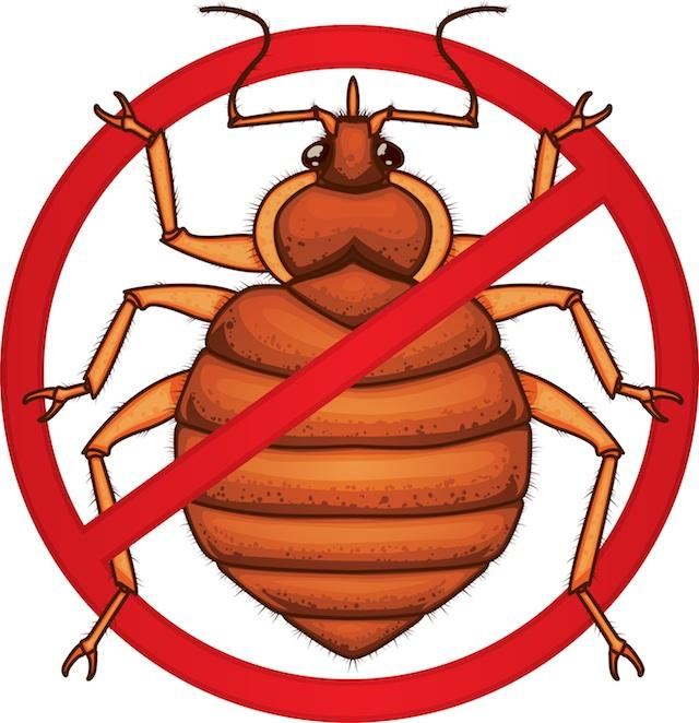 Kill Bed Bugs Putting Clothes In Dryer To Kill Bed Bugs