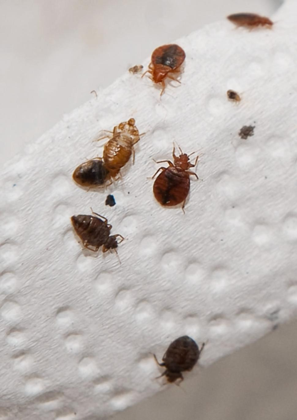What To Look For In Your Bed For Bed Bugs