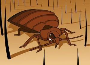 what kills bed bugs