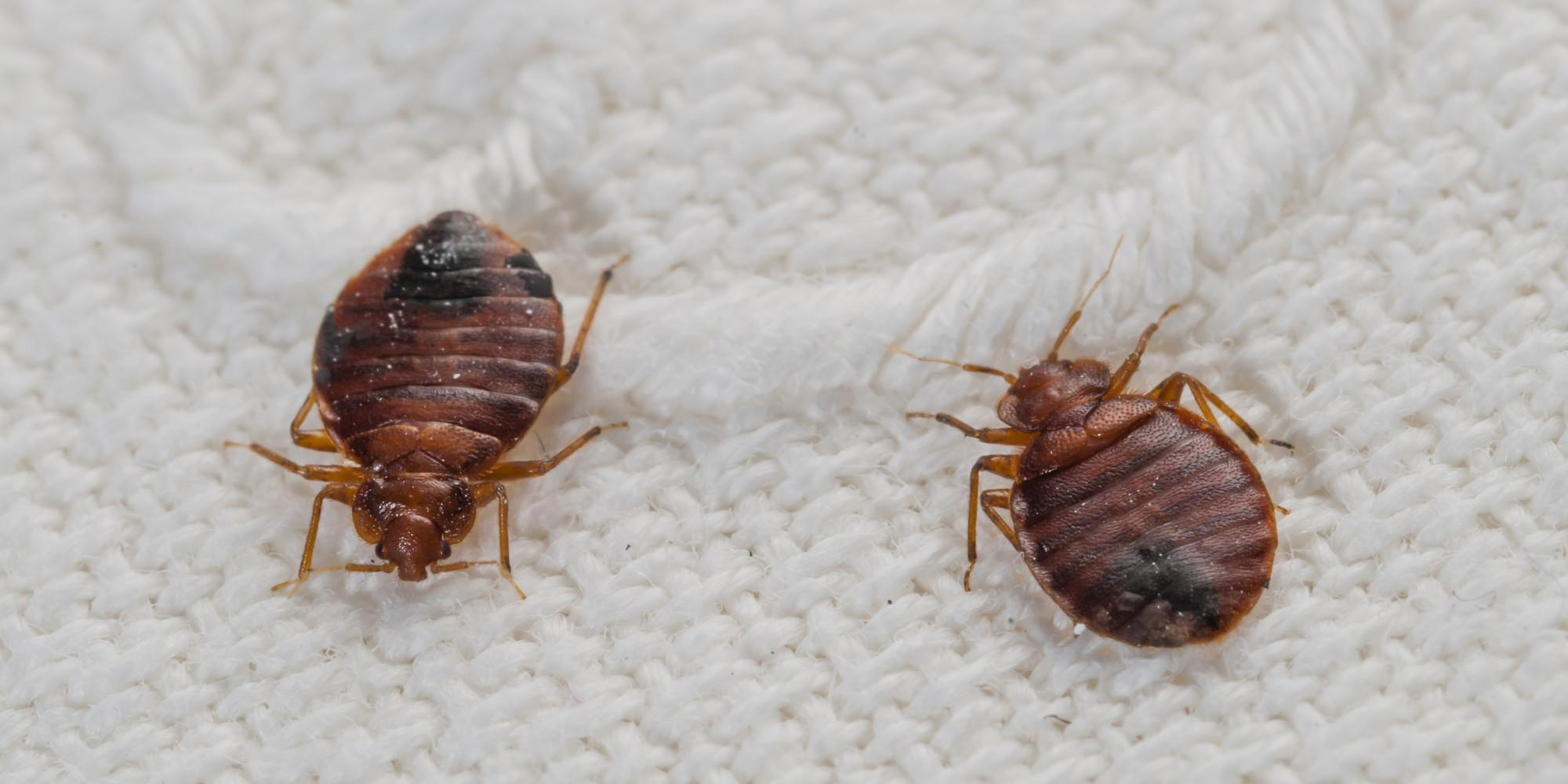 bugs where bed watch fly hide experiment youtube live do