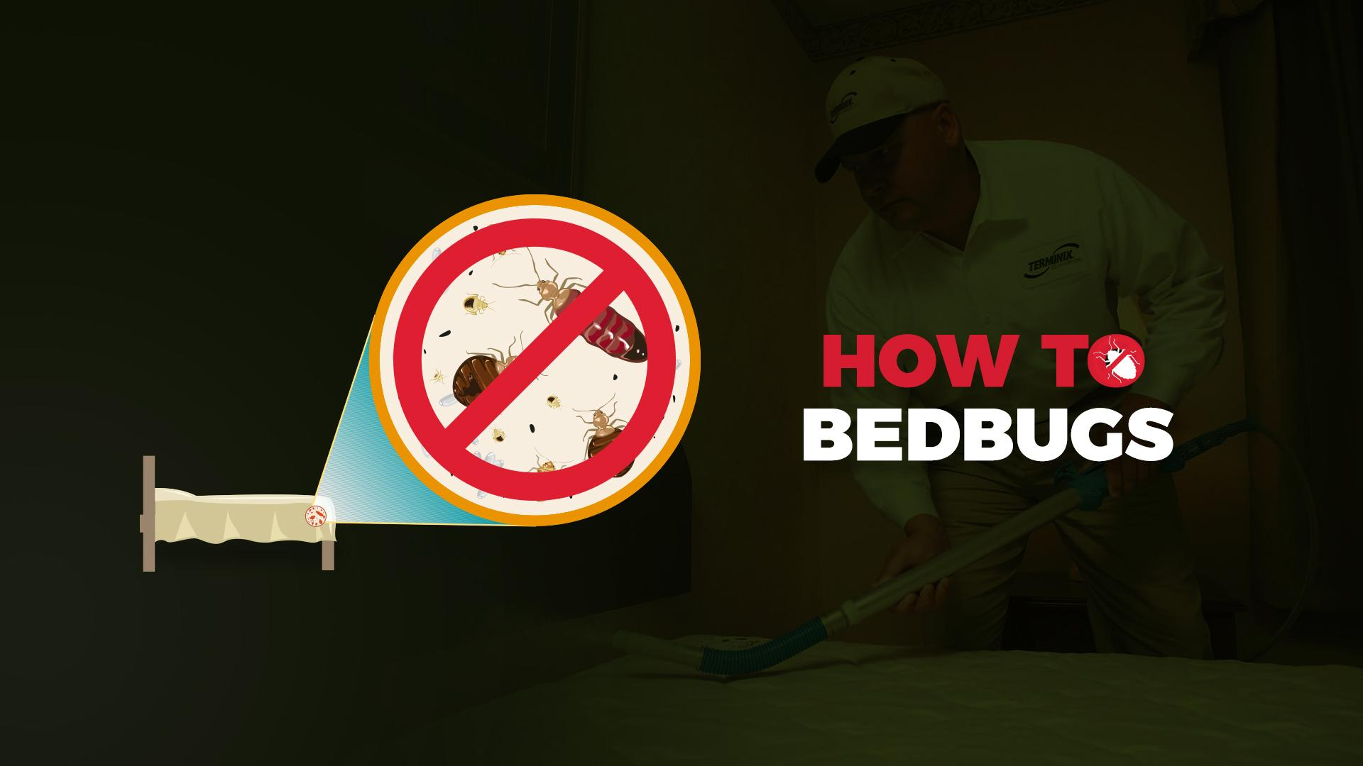 bed bug guide - page 5 of 6 - experts on bed bugs and bed bug