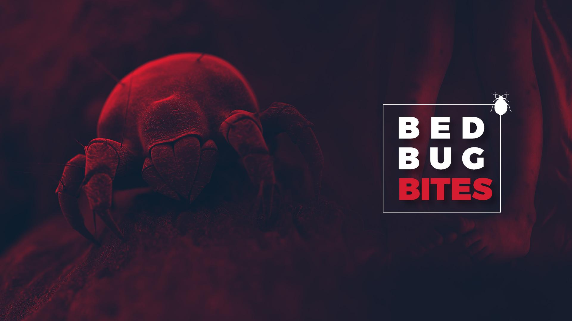 How Many Bed Bug Bites In One Night
